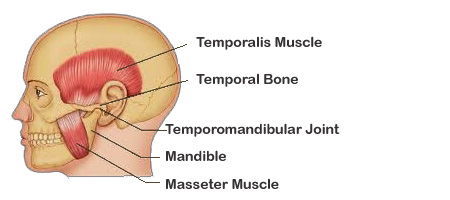 Tmj Therapy Pmc Massage Therapy
